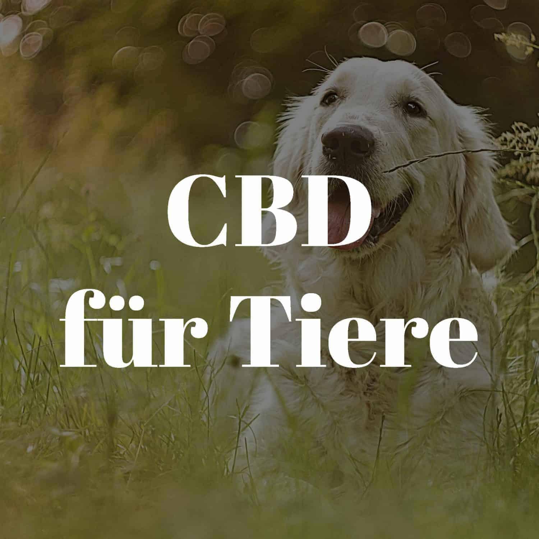 Malantis CBD Haustiere